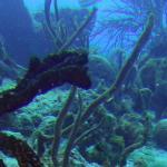 Foto di Dive Experience