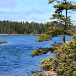 Photo de Ship Harbor Nature Trail