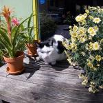 Always beautiful flowers adorn Lieve Nachten…plus a cat or two!