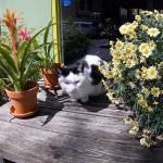 Always beautiful flowers adorn Lieve Nachten…plus a cat or two!