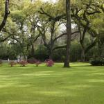 acres Live Oak trees