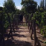 Foto de Finca Adalgisa Wine Hotel, Vineyard & Winery