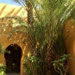 Shady palms and fragrant shrubs in an inner courtyard