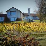 Rive Gauche B&B Lodge from vineyard