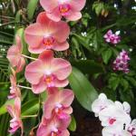 orchids, audubon garden