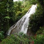 Photo de Shaw Park Gardens & Waterfalls