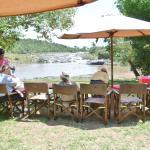 seating overlooking hippo pool