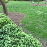 local inhabitants - squirrels