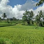 Arekarek Bali Cycling