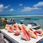 Caribbean Queen Conch shells at the fishermen dock on Bay Street