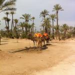 Photo de Riad El Farah