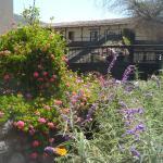 Sonesta jardines