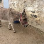 Donkey Sanctuary of Canada