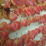 Autumn colours. Off season psckages. Contact martacino@hotmail.com