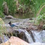 Picture was taken on Tonto Creek