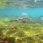Foto di Goat Island Marine Reserve