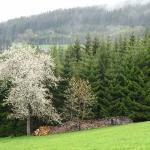 Blühender Kirschbaum beim Restaurant