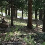 Deer behind Beaver Meadows Visitor's Center
