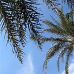 Photo de Rinjani Beach eco resort