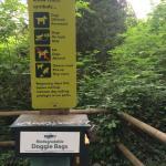 Mosquito Creek Hiking Trail Foto
