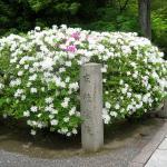 Foto de Koryu-ji Temple
