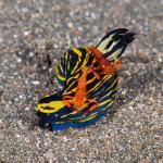 Photo de Two Fish Divers Lembeh