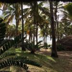 Jeff's Palm Resort ภาพถ่าย