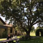 Views, wildlife, Billy at Roblar, Fess Parker indie door and vineyards, Rideau flatbread and win