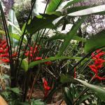 Majahua Hotel Selva Foto