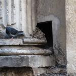 stilobate di colonna romana del I sec. d.C. lordata dai piccioni