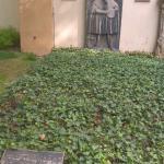 Могила Лукаса Кранаха Старшего