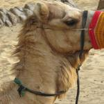 Arabian Adventures - Day Tours Foto