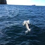 Foto de Tasman Island Cruises