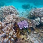 Ocean Safari Foto