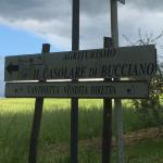 Photo de Agriturismo Il Casolare di Bucciano