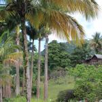 Le Jardin Malanga Foto