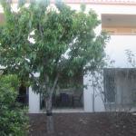 le cerisier de l'appartement 2