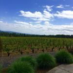 Ardiri Winery and Vineyards
