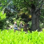 Jardin ombragé