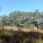 Thetford Game Reserve Foto
