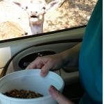 Briarwood Auto Safari Foto