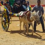 Donkey rides for kids