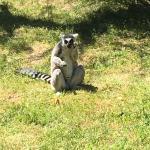 Safari Park Photo