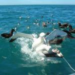 Albatross Encounter Foto