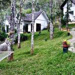 Niraamaya Retreats Cardamom Club - Thekkady Foto