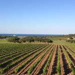 Une vue sur les vignes et la baie de Pampelone imprenable