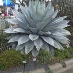Paul J Ciener Botanical Garden