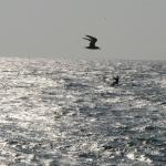 Elements Watersports & Nature Resort Foto