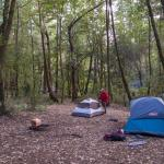 Camping in Hendy Woods