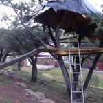 The treehouse.